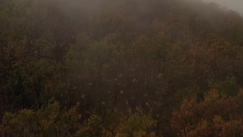 Flying Over A Forest On A Foggy Day 1
