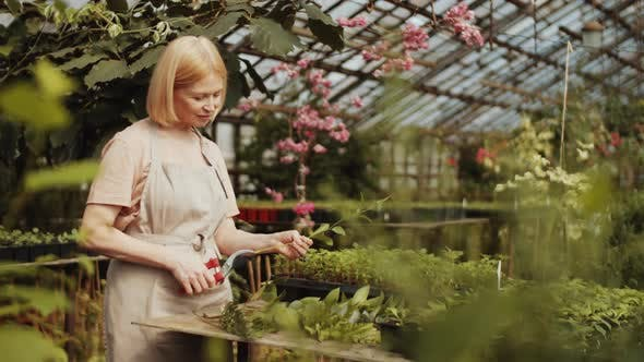 Thumbnail for Female Farmer Using Pruners while Working in Greenhouse