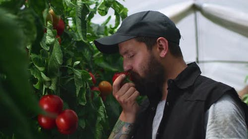 Glad Man Eating Tomato in Greenhouse