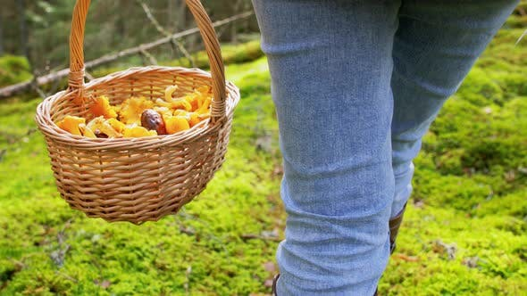 Thumbnail for Woman with Mushrooms in Basket Walking in Forest