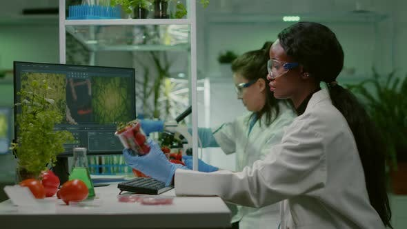 Chemist Researcher Injecting Strawberry with Organic Dna Liquid