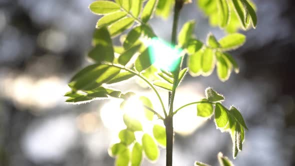 Thumbnail for Sunbeam In The Leaves 4