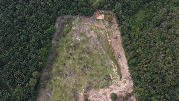 Deforest für Entwicklung in Malaysia