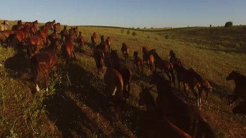 Brown Horses Are Running.