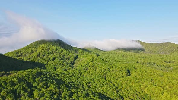 Beautiful Landscape of a Mountain Range Covered with Green Trees and a Fabulous Morning Fog