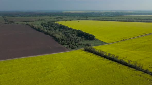 Thumbnail for Panorama of Agricultural Fields of Ukraine
