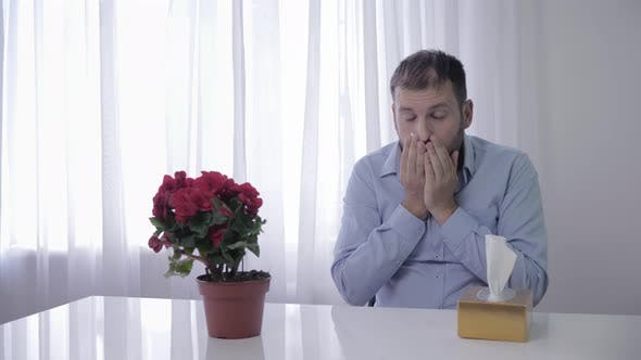 Thumbnail for Allergic on Pets, Unhealthy Man Constantly Sneezes and Wipes with Handkerchief Due To Causative