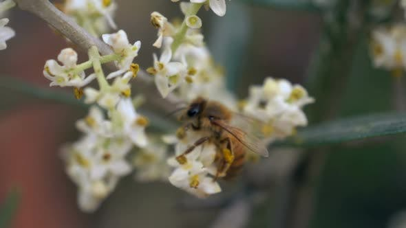 Thumbnail for Bee Flower Slow Motion