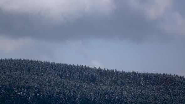 Thumbnail for Snowy Gray Clouds Form Over Forest in Mountains. Time Lapse