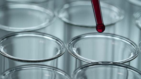 Thumbnail for Testing Blood