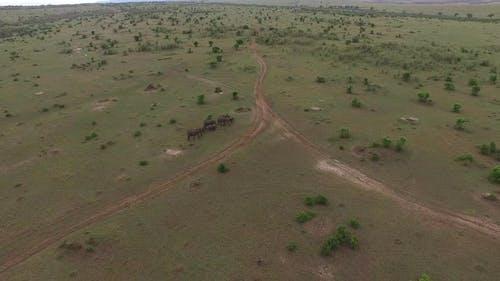 Aerial view of elephants walking in Africa