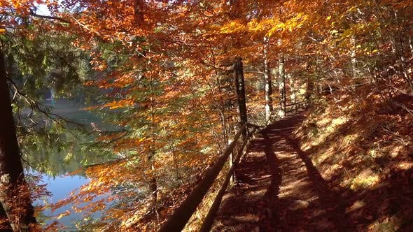 Thumbnail for Walking on Autumn Forest near the Lake