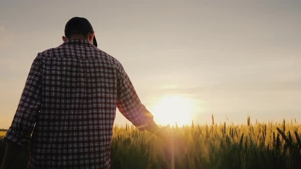 Thumbnail for Back View of a Farmer Walks Across a Field of Wheat in the Rays of Sunset, Stroking Spikelets