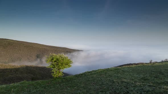 Thumbnail for Tree on the hill and falling fog