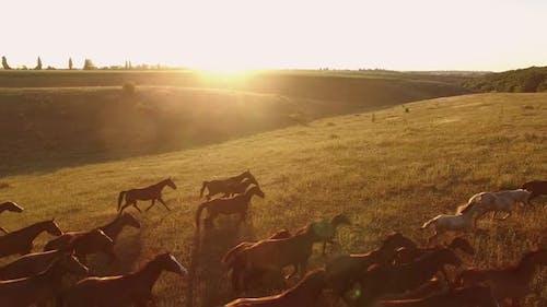 Horses Running on Grass.