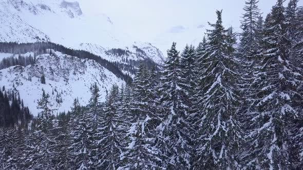 Thumbnail for Aerial drone view of trees and a forest in the snow covered mountains