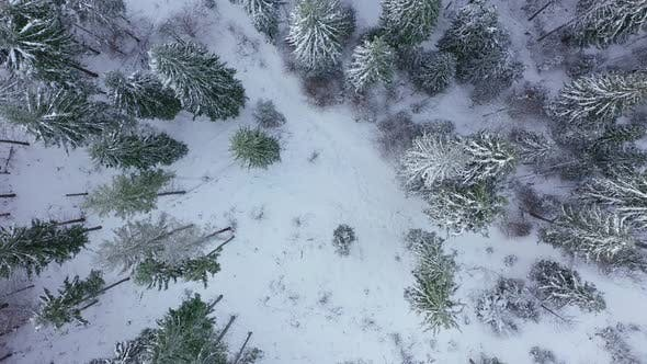 Thumbnail for Descent Over the Winter Snow-covered Forest. Winter Forest As Background