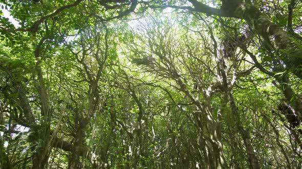 Thumbnail for Fresh Green Forest
