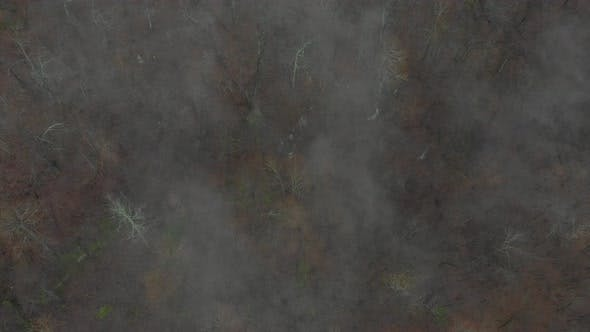 Thumbnail for Aerial Looking Down on Forest With Fog