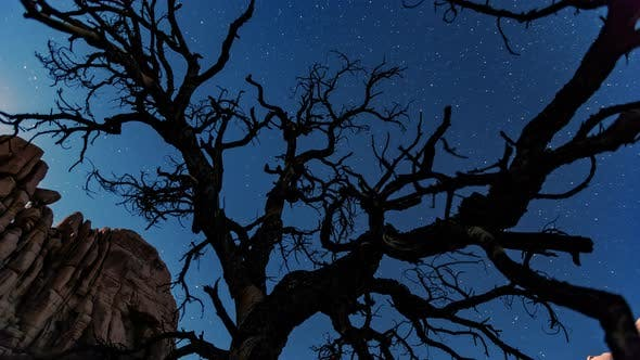 Thumbnail for Bare tree at night