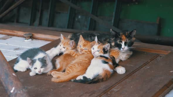 Thumbnail for Homeless Wild Kittens and Nursing Mom Cat Are Lying on the Street on Garbage