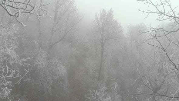 Scary Cold Frozen Forest