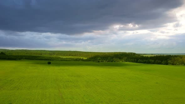 Nature Field Meadow