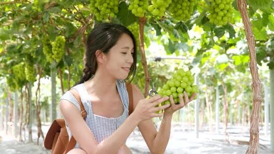 Thumbnail for Woman pick green grape in farm