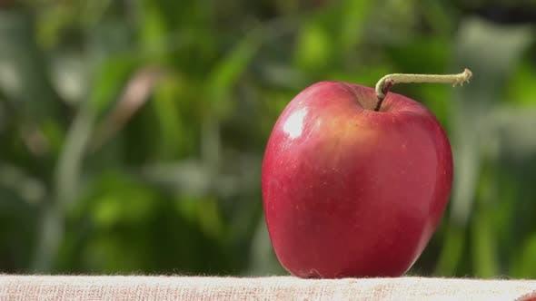 Thumbnail for Caterpillar on Apple