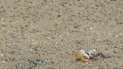 Kampf gegen Krabben