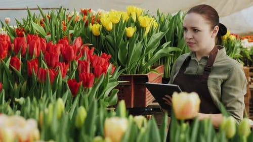Mid Adult Woman Working with a Digital Tablet in a Greenhouse