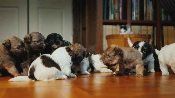 Thumbnail for A Group of Small Puppies Playing on the Floor, Behind Them Observes a Secretive Cunning Cat From a