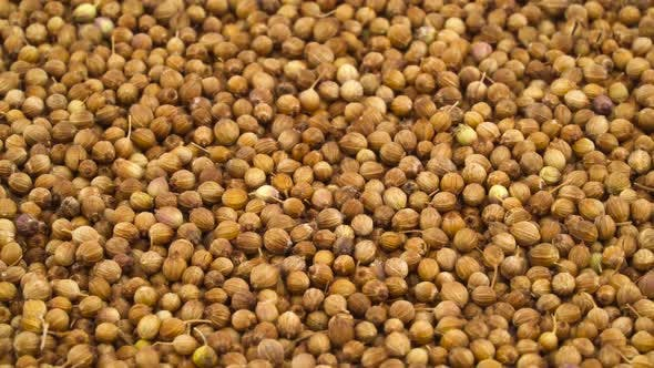 Thumbnail for Coriander Seeds Pile Rotating