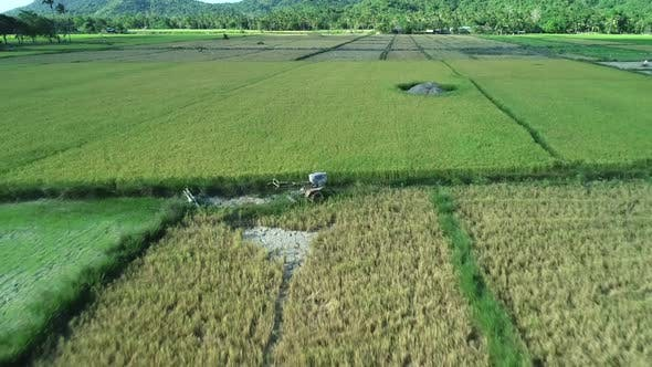Aerial View of Green Rectangles Rice Fields on Sunny Day