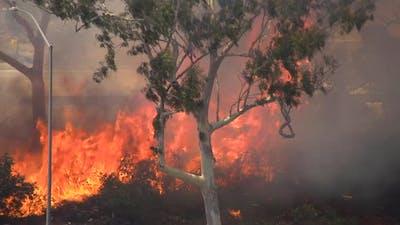 Brush Fire Los Angeles