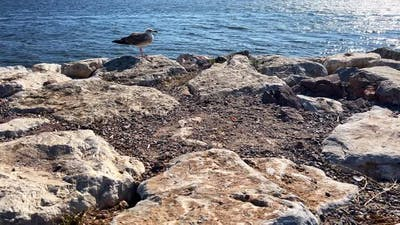 The Bird And Rocks Near The Sea