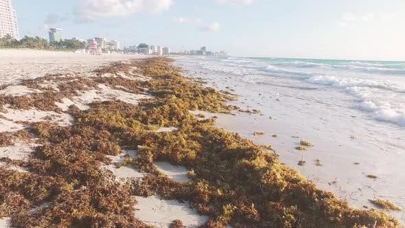 Thumbnail for Morning Waves And Seaweed - Miami Beach, Florida USA