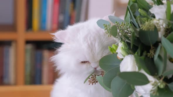 Thumbnail for Beautiful White Cat Is Eating Flowers