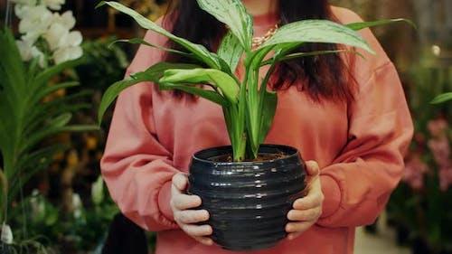 Close Up Female Gardener Holding Green Pot Plant in Hands Indoor Orangery