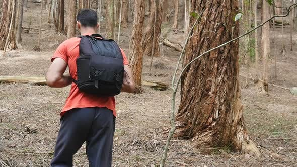 Thumbnail for Follow To Young Hiker Backpack Goes Up Hill Through Tall Trees Pine Forest