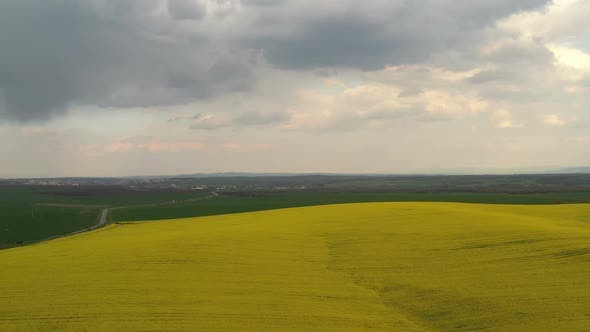 Thumbnail for Rapeseed Plantations Under Cloudy Sky 12