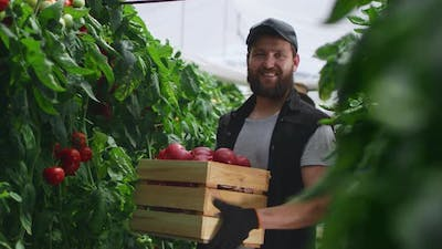 Happy Male Farmer with Box of Tomatoes