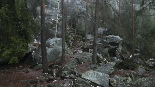 Foggy Forest In The Carpathians, Dovbush Rocks