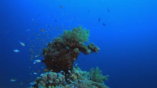 Underwater World Red Sea Life