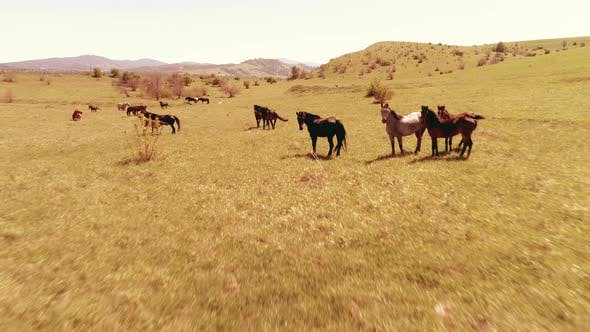 Thumbnail for Flight Over Wild Horses Herd on Mountain Meadow. Summer Mountains Wild Nature. Freedom Ecology