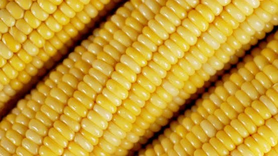 Thumbnail for Fresh Yellow Corn Rotates Slowly.