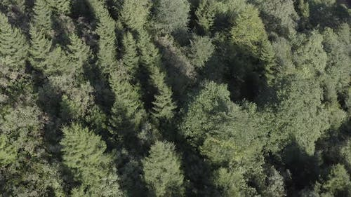 Trabzon City Forest Top View