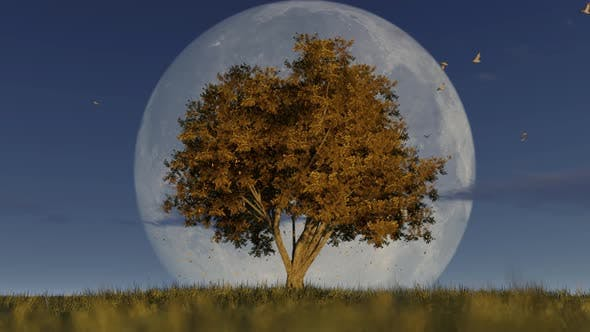 Thumbnail for Autumn Tree In Fall Season And Full Moon