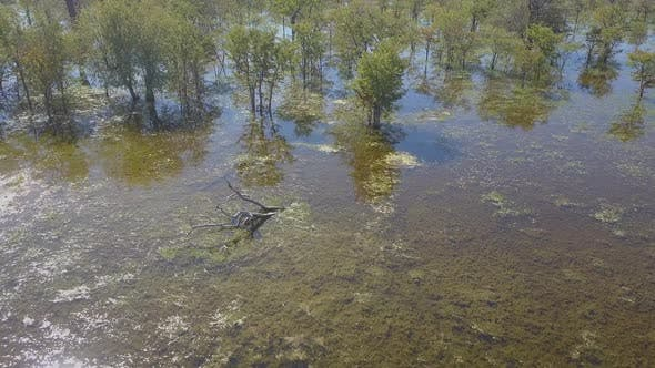 Aerial drone view of a swamp lake in Africa.