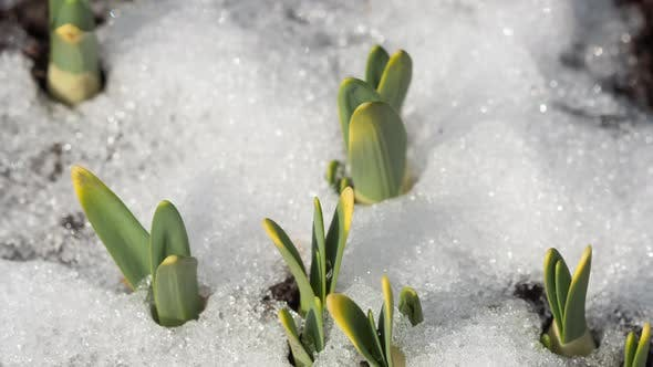 Thumbnail for Time-Lapse Shot of Melting Snow